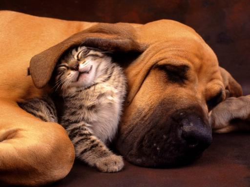 great-friends-dog-and-cat-512x384-147