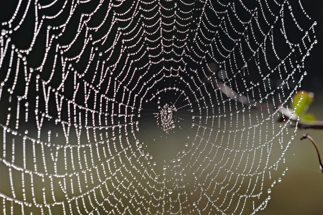 Spider_web_with_dew_drops04