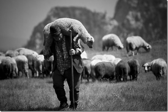 shepherd-carrying-sheep1_thumb