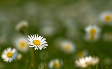 small-daisies-macro-2560x1440-wallpaper643728